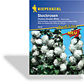Stockrose Chaters Double White, Kiepenkerl